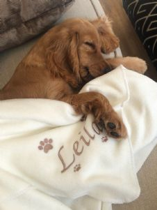 Personalised Paw Prints Dog Blanket